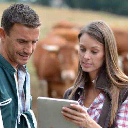 BTS ACSE (Analyse, Conduite et Stratégie de l''Entreprise agricole) - QUESSOY