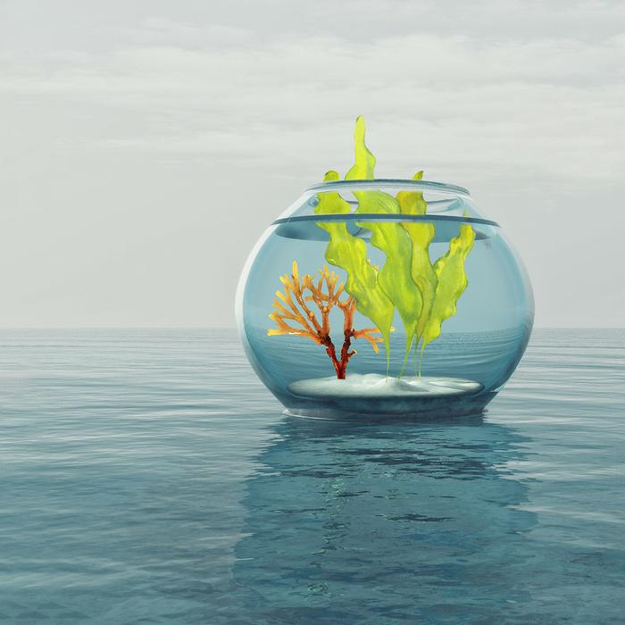 Licence Pro : Culture et Procédés de Transformation Industriels des Macro-Algues